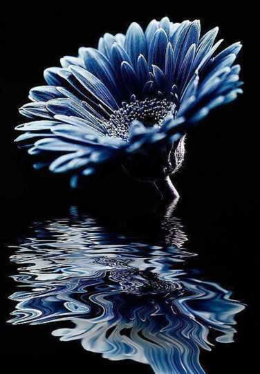 Diamond paint. Gerbera blauw DL4050/107