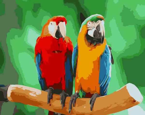 Schilderen op nummer papegaaien PBND4003
